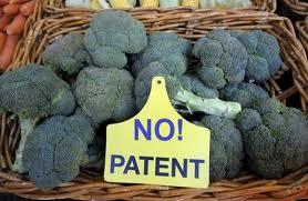Monsanto patent broccoli