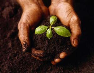 handplantje