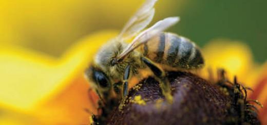 Monsanto vernielt honingoogst